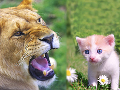 lioness kitten 2