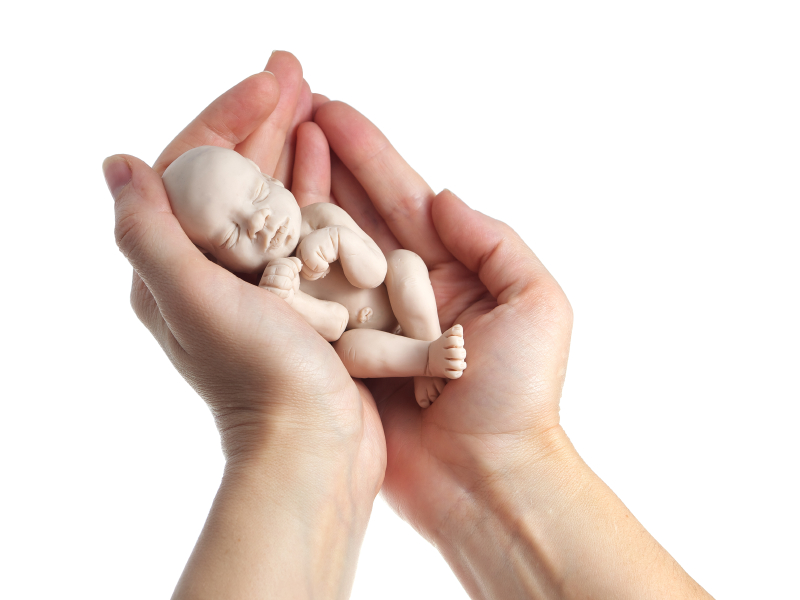 embryo in woman hand