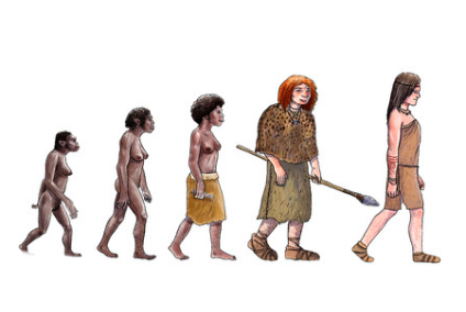 50519094 - human evolution digital illustration, homo erectus, australopithecus,sapiens